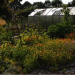 Gartenführung_1